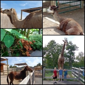 creation museum botanical garden petting zoo