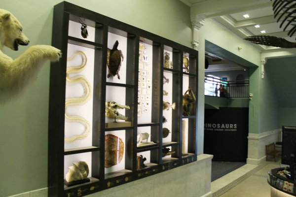 Academy of Natural Sciences wall with different reptiles