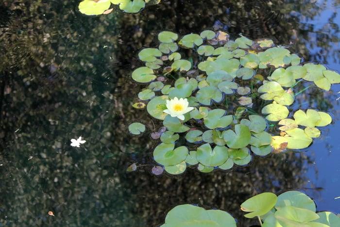 Fort Worth Botanic Gardens Lily - www.realthekitchenandbeyond.com
