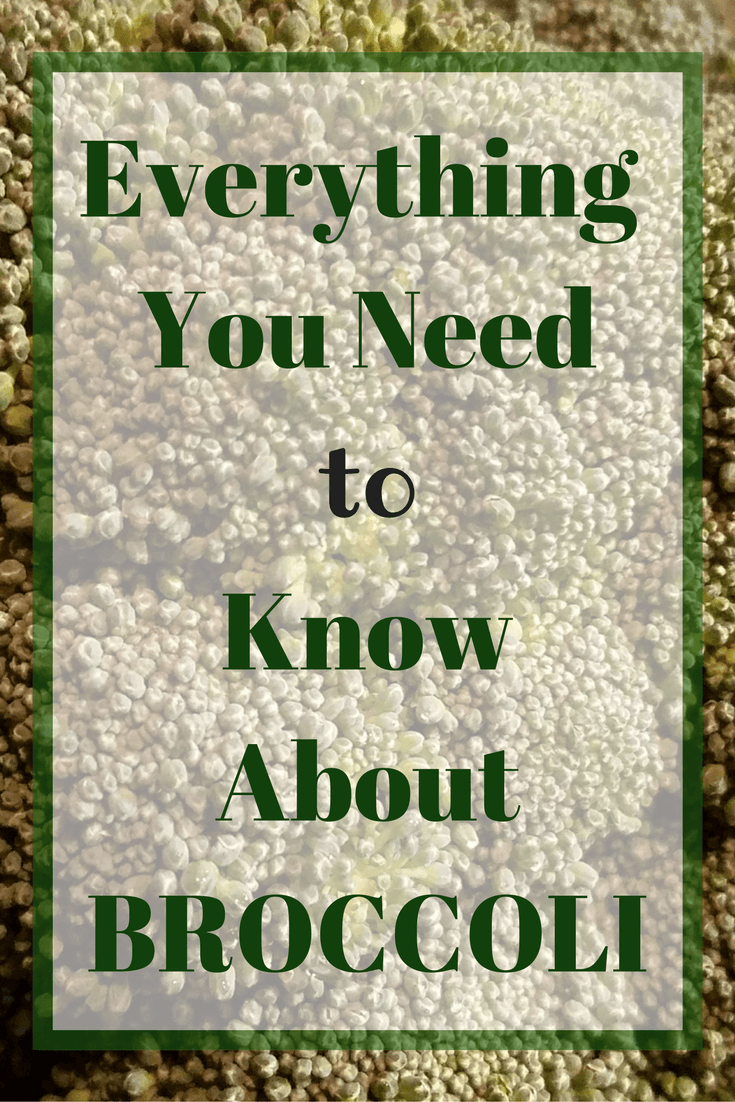 Everything You Need to Know About Broccoli