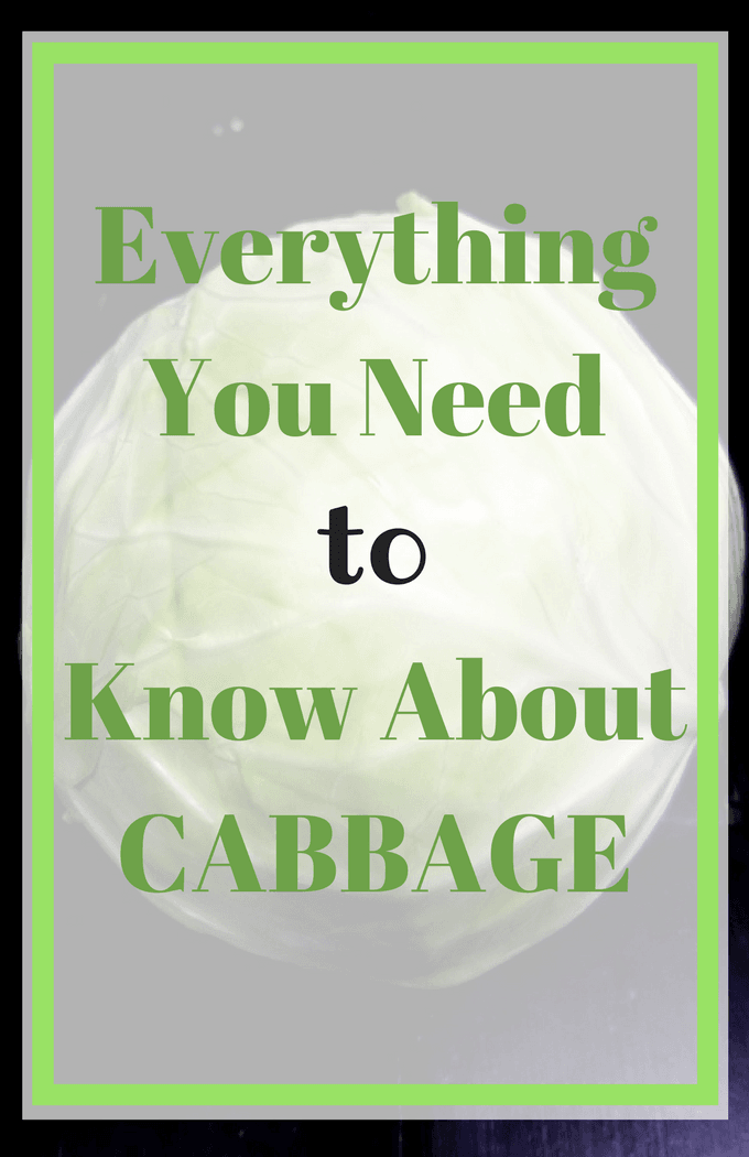 Everything You Need Know About CABBAGE