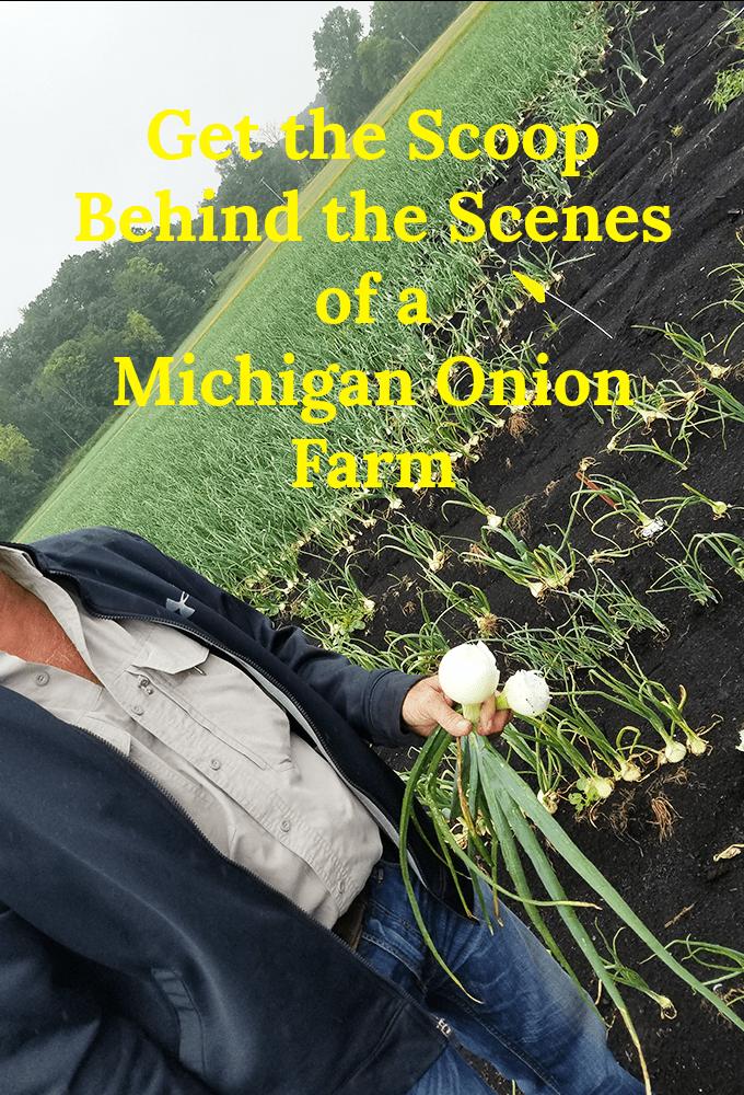 Onion Grower in Michigan Onion Field