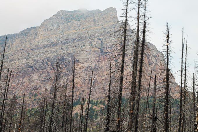 Glacier National Park Family Road Trip craggy mountain with burned pine trees