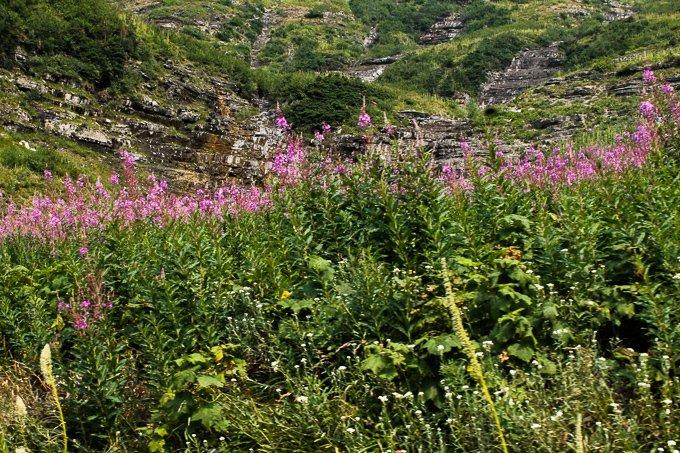 Glacier National Park Family Road Trip wildflowers